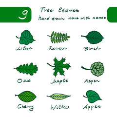 Set of spring hand drawn leaves