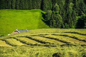 Hidden rooftop of house behind hayfields