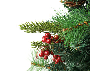 Fragment of a Christmas tree isolated