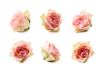 Single white rose bud isolated