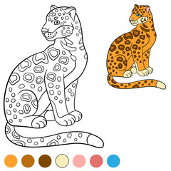 Panther Photos Royalty Free Images Graphics Vectors Videos