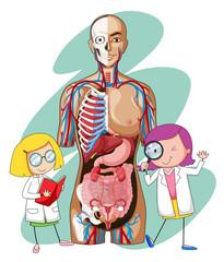 Doctors and human anatomy model