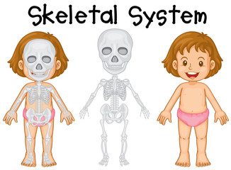 Little girl and skeletal system