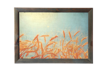 Old wood photo frame with a wheat ears against the sun shining.Toned colors.Old paper texture.Vintage style agriculture field image framework isolated on the white background. Nature art design