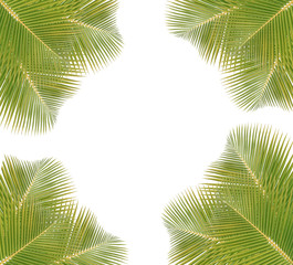 Coconut leaves frame  isolated on white background