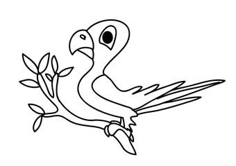 Fototapeta papuga obraz