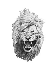 Pencil drawing of a lion head