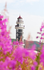View of lighthouse through the flowers Purple Alpine Cyprus. Resort Goryachinsk, Siberia. Russia. Lighthouse on the coast of Lake Baikal.