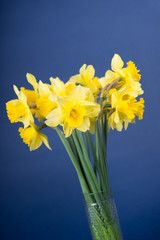 Acrylic Prints Narcissus narcisses in a vase