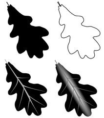 oak,(Quercus robur)