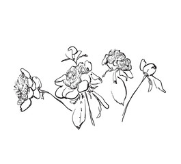 Flowers doodle sketch isolated vector