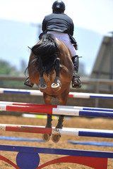 The rider overcomes the obstacle on the horse jumping competition