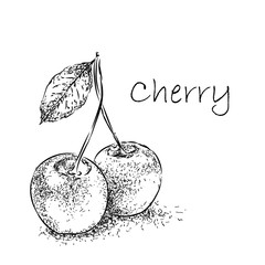 Hand drawn sketch cherry. Vintage eco food vector illustration
