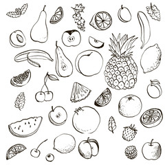 fruits and berries vector set