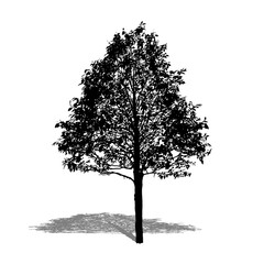 silhouette black tree. vector logo design. isolated natural plan