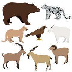 Vector set of cartoon mountain animals. Grizzly bear, mountain goat, markhor, nubian ibex, mouflon, puma, snow leopard, golden eagle.