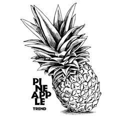Pineapple. Vector black and white illustration.