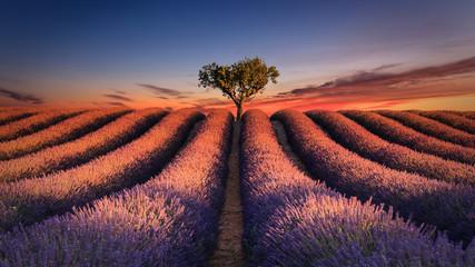 Fotobehang Lavendel Lever de soleil sur un champ de lavande. Valensole - Alpes-de-Haute-Provence