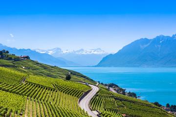 Vineyards in Lavaux region - Terrasses de Lavaux terraces, Switz Fototapete