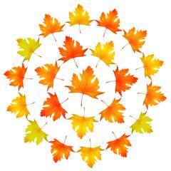 Maple leaves round frame vector illustration