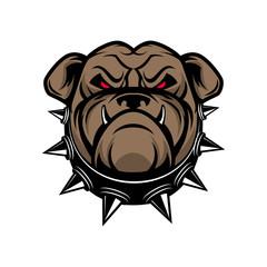 Bulldog head isolated on white background. Sport team mascot.