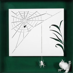 The food chain. A fly trapped in a spider's web and the spider soon eaten by the frog.