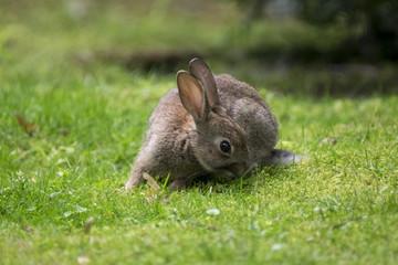 Kleines Kaninchen im Park