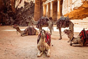 Bedouin camels resting near the treasury Al Khazneh, Jordan, Petra.