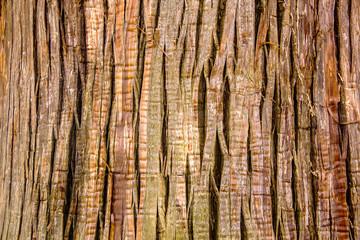 Close Up of giant tree Bark