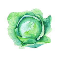 cabbage. isolated on white background. watercolor illustration.