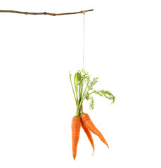 Hanging carrots, isolated on white
