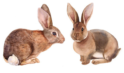 rabbit watercolor set