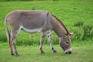 Donkey in a clearing in the wild