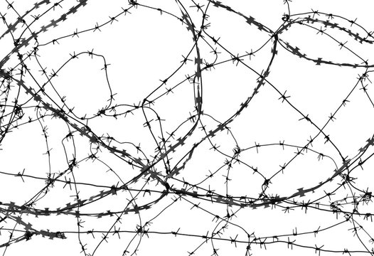 Barbed wire on white background