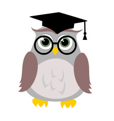 Cute education owl vector