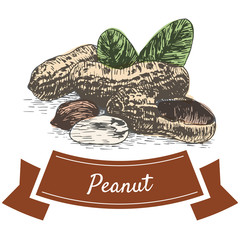 Vector colorful illustration of peanut