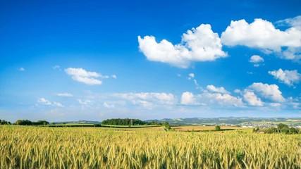 Fotoväggar - Timelapse Video von einem Weizenfeld und ziehenden weißen Wolken