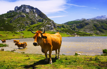 Wall Murals Cow mountains landscape with lake and cows