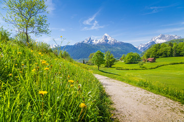 Idyllic landscape in the Alps with meadows and flowers