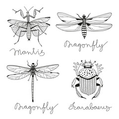 vector set with four hand drawn insects..