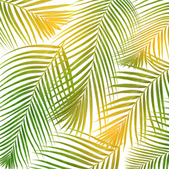Poster Tropische Bladeren sun over green leaves of palm tree on white background
