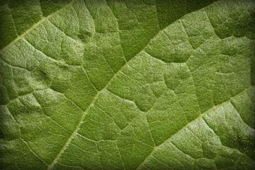 Natural background - leaf blade
