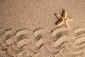 Starfish and shells with sand as background. Sand texture