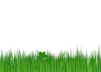 Grass. Vector