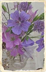 Wall Mural - Romantic flower still