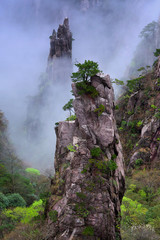 Rocks over mist in Huangshan Mountain (Yellow Mountain), China