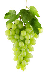 green grapes isolated on the white backhround