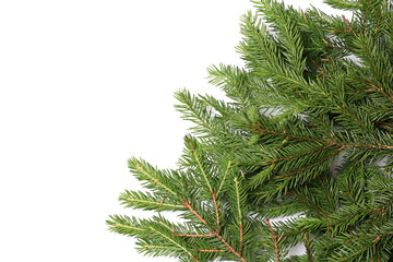 fir tree branches isolated on white background christmas backgro