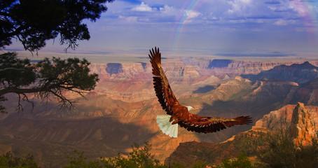 Wall Mural - Eagle takes flight over Grand Canyon USA
