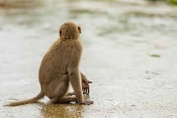 Monkey's Back